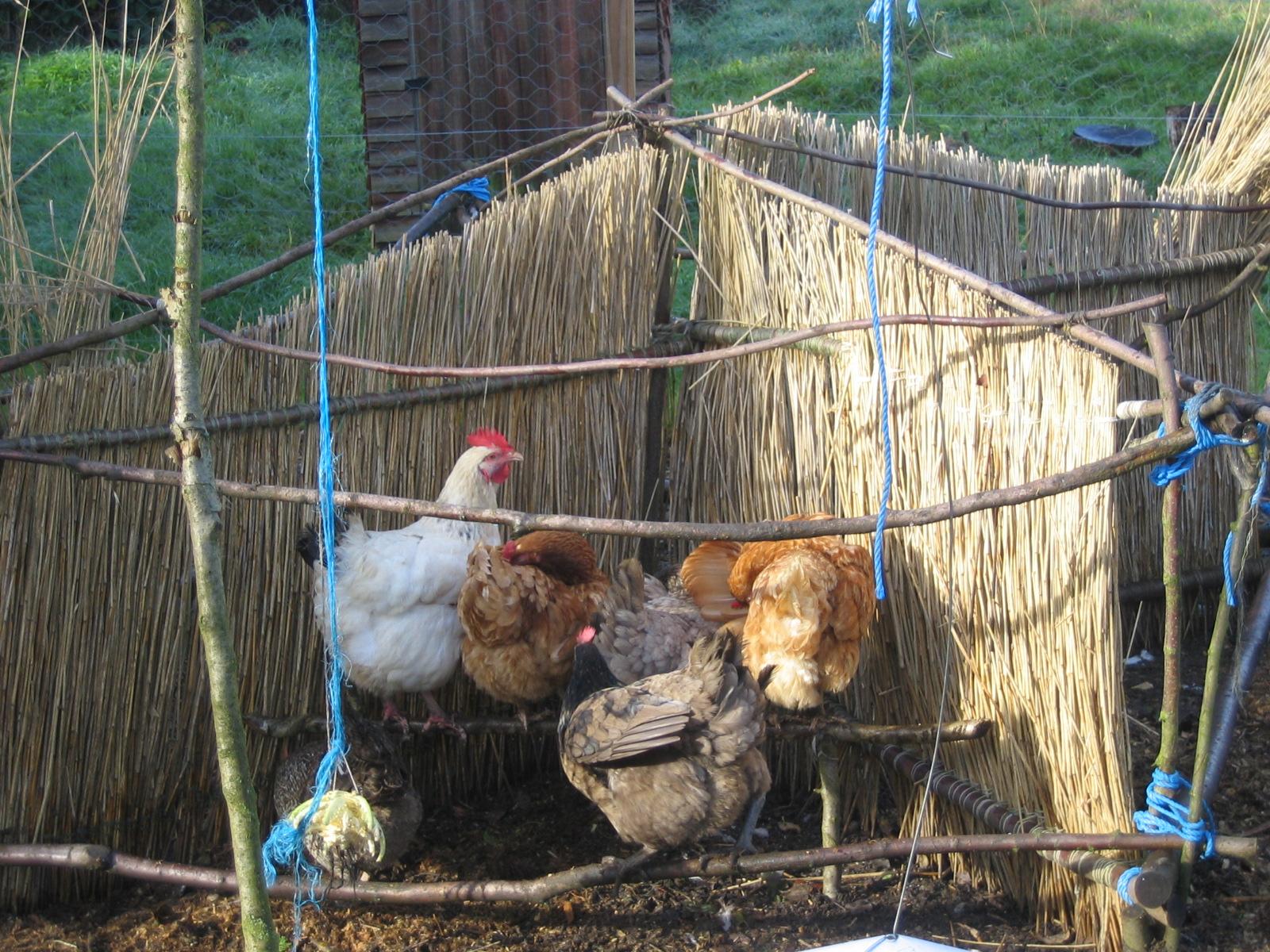 Petra's Hen Shelter